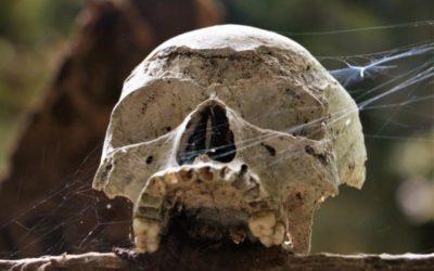Sulawesi – Triple T: Tauchen, Tod und Tausend Eindrücke