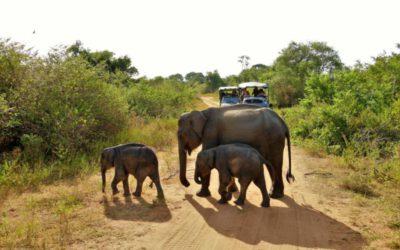 Sri Lanka – Curry, wilde Elefanten und Kopf-Gewackel